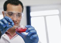 Stock Photo of Romania,Bucharest, Laboratory technician with petri dish