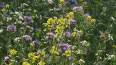 Field edge with yellow and pink wild flowers - full screen Stock Footage