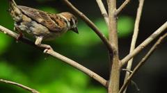 Bird Perching on Branch Stock Footage