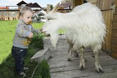 baby feeding a goat - stock photo