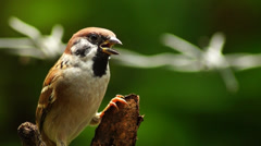 Maya Bird Perching Tree Branch Stock Footage