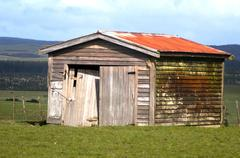 deserted barn on a farm, nz - stock photo