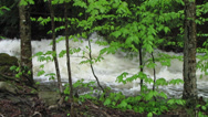 Stock Video Footage of Flash Flood in Mountain Stream