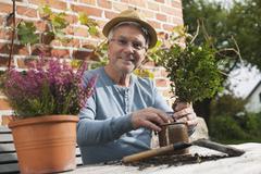 Germany, Kratzeburg, Senior man doing flower gardening Stock Photos