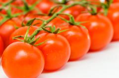 branch of the tomato - stock photo