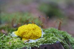 slime mould - stock photo