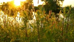 Lake shore close-up in the evening, sun rays, atmospheric Stock Footage