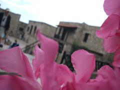 Pink flowers, rhodes old town Stock Photos