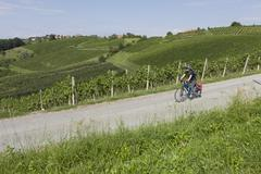 Slovenia, Maribor, Mature man cycling through vineyard Stock Photos