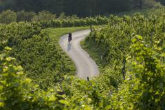 Slovenia, Spicnik, Mature man cycling through vineyard Stock Photos