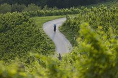 Slovenia, Spicnik, Mature man cycling through vineyard - stock photo