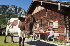 Stock Photo of Austria, Salzburg, Men and women sitting and drinking at alpine hut
