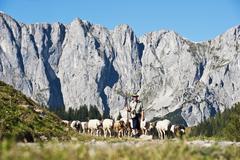 Austria, Salzburg County, Shepherd herding sheep on mountain Stock Photos