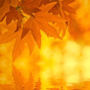 Autumn leaves, reflecting in water, very shallow focus Stock Illustration