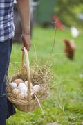 Germany, Bavaria, Boy with basket of eggs and chicken on farm Stock Photos