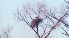 Eagle,nest wide,Silt,Co Stock Footage