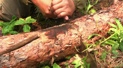 Cutting timber with a hand saw Stock Footage