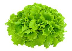 Leaves of lettuce Stock Photos