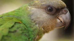 Animal Bird Two green parrots playing on Perch Stock Footage