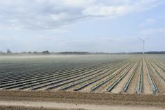 Germany, Mecklenburg-Western Pomerania, View of strawberry field, windpower in - stock photo