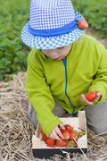 Germany, Saxony, Boy picking strawberry from wooden box, close up - stock photo