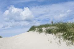 Germany,  Mecklenburg Western Pomerania, Ammophila arenaria on sand dunes Stock Photos