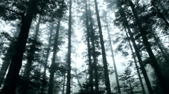 Low angle view of forest trees. ( 12 seconds) Stock Footage