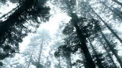 Low angle view of forest trees. (13 seconds) Stock Footage