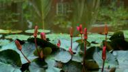 Stock Video Footage of Flowers on the Water - Spring