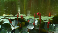 Stock Video Footage of Flowers on the Water - Raining