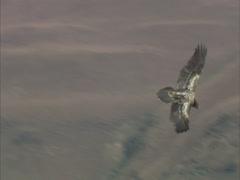 Bird soars Stock Footage