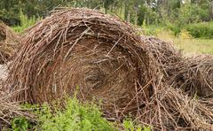 Old pile of straw or hay with round bale Stock Photos
