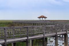 bung bua(lotus pond) khao sam roi yot national park - stock photo