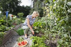 Germany, Bavaria, Nuremberg, Mature woman with vegetables in garden Stock Photos