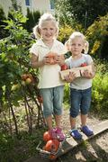 Germany, Bavaria, Girls gathering tomatoes in vegetable garden - stock photo
