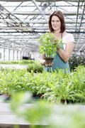 Germany, Bavaria, Munich, Mature woman in greenhouse with basil plants Stock Photos