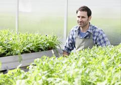 Stock Photo of Germany, Bavaria, Munich, Mature man in greenhouse between rocket plant