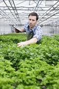 Germany, Bavaria, Munich, Mature man examining parsley plants in greenhouse - stock photo