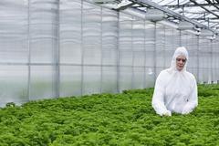 Germany, Bavaria, Munich, Scientist examining parsley plants in greenhouse Stock Photos