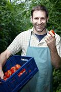 Germany, Bavaria, Munich, Mature man harvesting tomatoes in greenhouse - stock photo