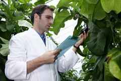 Germany, Bavaria, Munich, Scientist in greenhouse examining aubergine plants Stock Photos