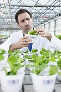 Germany, Bavaria, Munich, Scientist in greenhouse examining corn salad plants - stock photo