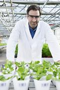 Germany, Bavaria, Munich, Scientist in greenhouse with corn salad plants - stock photo