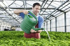 Stock Photo of Germany, Bavaria, Munich, Mature man in greenhouse watering parsley plants