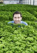 Stock Photo of Germany, Bavaria, Munich, Mature man in greenhouse between parsley plants
