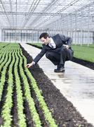 Germany, Bavaria, Munich, Mature man examining seedlings in greenhouse - stock photo