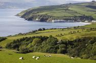 Stock Photo of United Kingdom, Northern Ireland, County Antrim, View of sheep grazing on grassy
