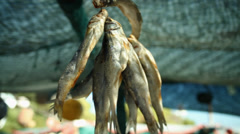 Fish hanging up to dry Stock Footage