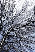 Stock Photo of Germany, View of bare tree with branches