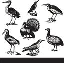 Stock Illustration of Vintage birds illustrations. Vector set